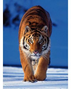 Clementoni puslespill Tiger - 260 minibrikker