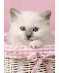 Clementoni mini puslespill hvit katt - 260 brikker